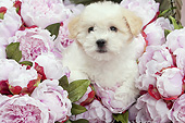 PUP 50 JE0015 01
