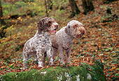 PUP 50 KH0007 01