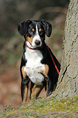 PUP 50 SS0005 01
