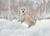PUP 50 YT0004 01