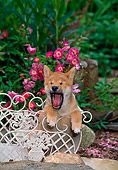 PUP 50 CE0004 01