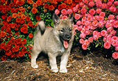 PUP 50 FA0001 01