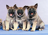 PUP 50 FA0005 01