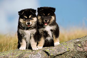 PUP 50 KH0001 01