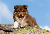 PUP 50 KH0003 01