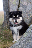 PUP 50 KH0005 01
