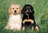 PUP 50 SS0002 01