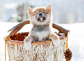 PUP 50 YT0003 01