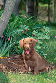 PUP 51 CE0005 01