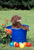 PUP 51 CE0007 01