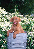 PUP 51 CE0008 01