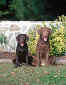 PUP 51 CE0009 01