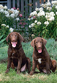 PUP 51 CE0010 01