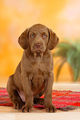 PUP 51 PE0001 01
