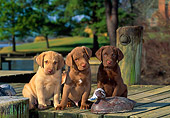 PUP 51 CE0002 01