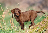 PUP 51 SS0001 01
