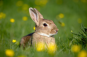 RAB 01 GL0001 01