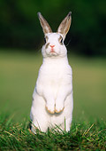 RAB 01 GR0082 01