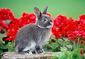 RAB 01 GR0107 02