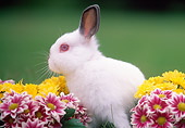 RAB 01 GR0114 01