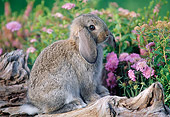 RAB 01 GR0158 02