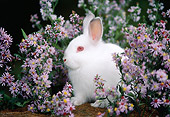 RAB 01 GR0201 01