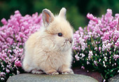 RAB 01 GR0233 01