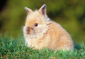 RAB 01 GR0240 01