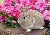 RAB 01 GR0244 01