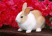 RAB 01 GR0269 01