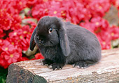 RAB 01 GR0271 01