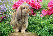 RAB 01 GR0274 01