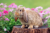 RAB 01 GR0277 01