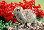 RAB 01 GR0278 01