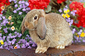 RAB 01 GR0279 01