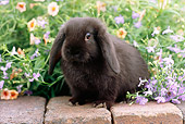 RAB 01 GR0283 01