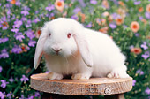 RAB 01 GR0285 01