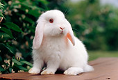 RAB 01 GR0286 01