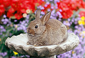 RAB 01 GR0292 01