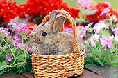 RAB 01 GR0294 01