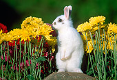 RAB 01 GR0302 01