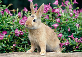 RAB 01 GR0305 01