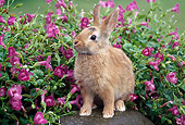 RAB 01 GR0306 01