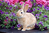 RAB 01 GR0308 01