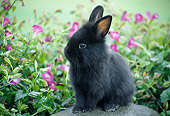 RAB 01 GR0320 01