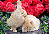 RAB 01 GR0323 01