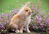 RAB 01 GR0324 01
