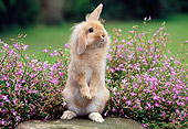 RAB 01 GR0325 01