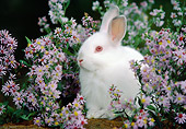 RAB 01 GR0329 01