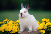 RAB 01 GR0333 01